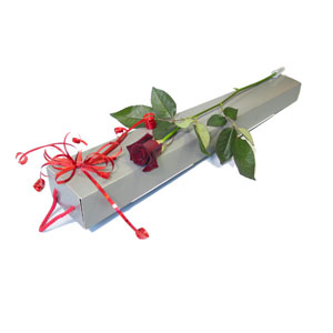 Classic Valentine's Day Boxed Rose